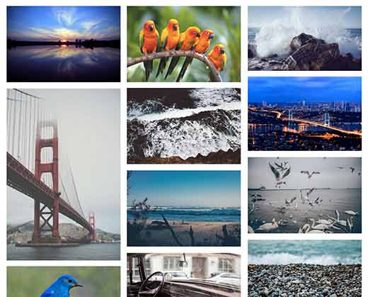 A photo gallery in a WordPress website